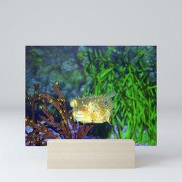 Striped Burrfish Mini Art Print