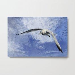 Ring Billed Seagull In Flight Metal Print