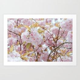 Flower Blossom Tree Art Print
