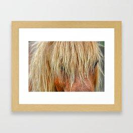 Shaggy Pony Framed Art Print