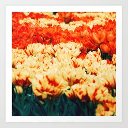 Tulips field 18 Art Print