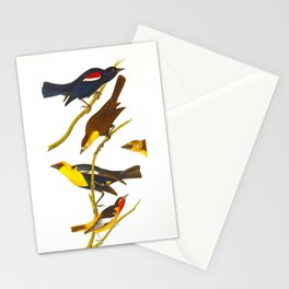 Nuttall's Starling, Yellow-headed Troopial, Bullock's Oriole Stationery Cards