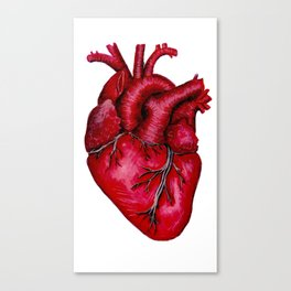 Anatomical Heart Painting Red Canvas Print