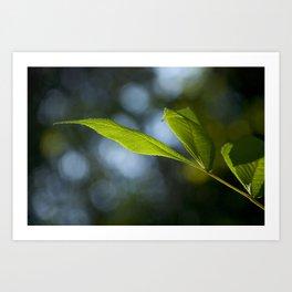 Grows Slippery Leaves Art Print