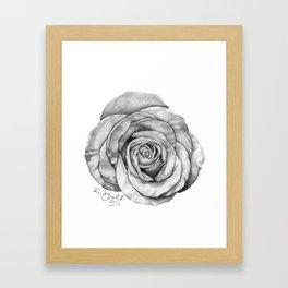Rose Drawing Framed Art Print