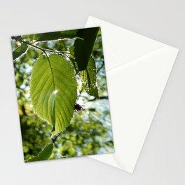 Sunlight Canopy II Stationery Cards