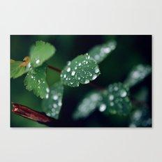 Water leaf Canvas Print