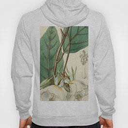 Edwards' Botanical Register Hoody