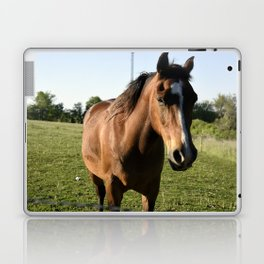 Brown Horse in a Pasture Laptop & iPad Skin