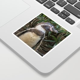 Humboldt penguin in profile Sticker