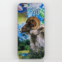 ram iPhone & iPod Skins featuring Ram by John Turck