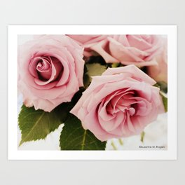 Sterling Roses, No. 4 Art Print