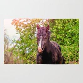 Dark bay horse Rug