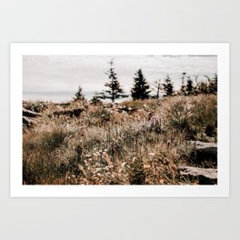 Wildflowers of Grandfather Mountain Art Print