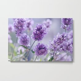 lavender Purple Metal Print