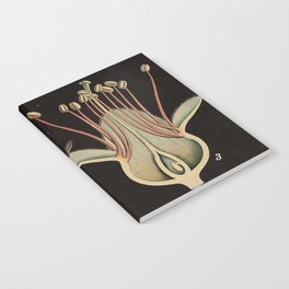 Botanical Almond Notebook