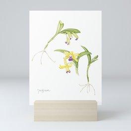 3 Stem flowering yellow and purple cattleya orchid Mini Art Print