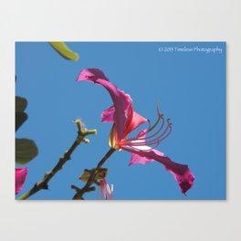 Against Blue Canvas Print