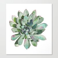 succulent Canvas Prints featuring Succulent by LouiseDemasi