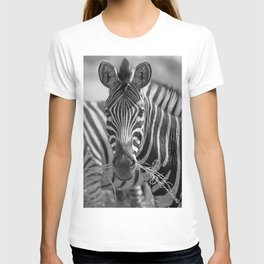 Zebra with grass, Africa wildlife T-shirt