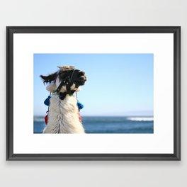 Beach Lama Framed Art Print