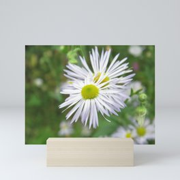 CHAMOMILE FLOWER (1 of 2) Mini Art Print