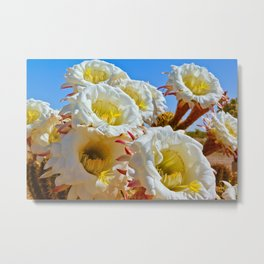 Echinopsis Parade Metal Print