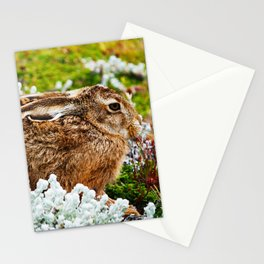 Rabbit at Otway Sound Chile Stationery Cards