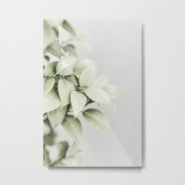 Green Camellia Leaves. Minimalistic print - fine art photography Metal Print