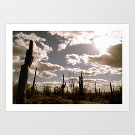 Saguaro National Park, Arizona Art Print