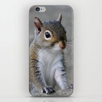 squirrel iPhone & iPod Skins featuring Squirrel by Charlene McCoy