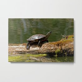 Painted Turtle on a Log - Photography Metal Print