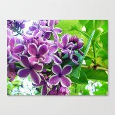 Lilac Love Canvas Print
