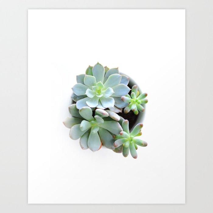 Succulent #1 Art Print