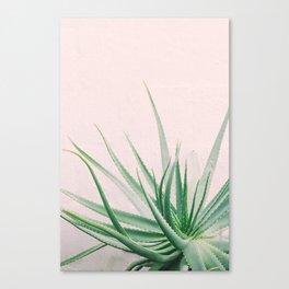 Minimal Aloe on pink background - Aloe Photography Canvas Print