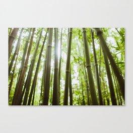 Hawaii Bamboo Canvas Print