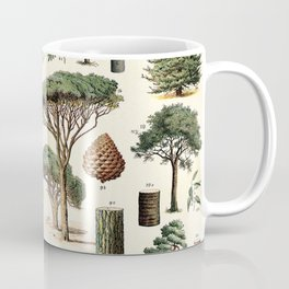 Evergreen Trees Vintage Scientific Illustration Encyclopedia Labeled Diagrams Coffee Mug