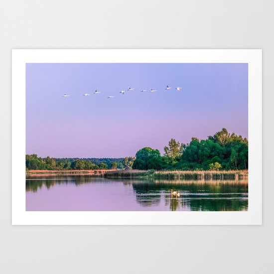 Swans are flying Art Print