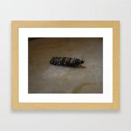 Horned Moth Framed Art Print