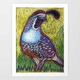 California Quail King Art Print
