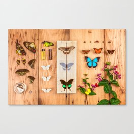 Butterfly Collector Canvas Print