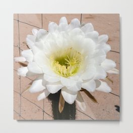 GOLDEN TORCH CACTUS FLOWER Metal Print