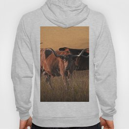 Texas Longhorn Steers on the Prairie at Sunset Hoody