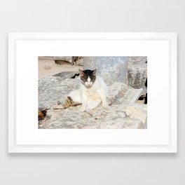 Stray Cat Straight Chilling Framed Art Print