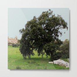 Old Cork Oak Tree Meadow Metal Print