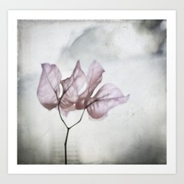 pale flower Art Print