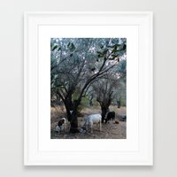 cows Framed Art Prints featuring Cows by aeolia