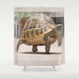 Marching Baby Tortoise  Shower Curtain