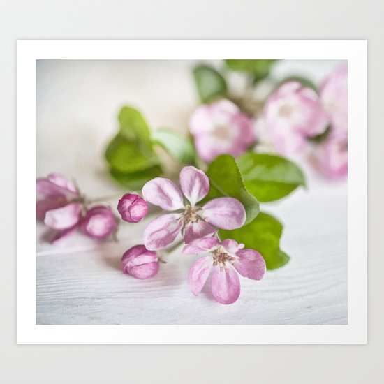delicate pink Apple Blossom close up Art Print