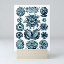 Ernst Haeckel Sea Squirts Cerulean Mini Art Print